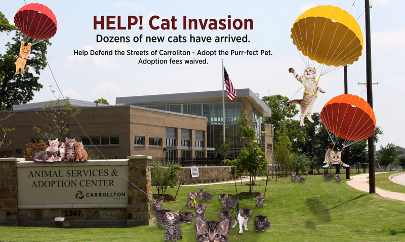 Kitten-Invasion-Poster_2017