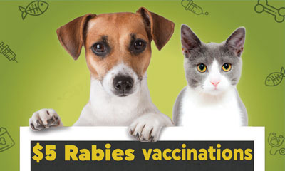 Rabies-Vacc-inset