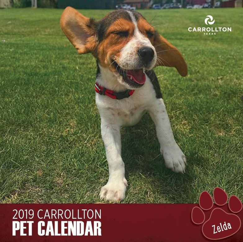 Pet Photo Calendar cover 2019