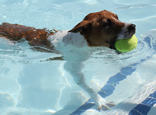 Pooch-Pool-Party